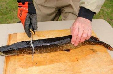 Как очистить щуку от чешуи